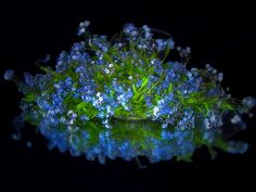 still life with forget me not by Dzintra Regina Jansone - Photo 203162757 / 500px
