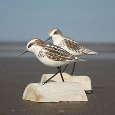 Little Stint Bird Carving Running | Hand Carved Birds | Wooden Bird Carving - buy the sea