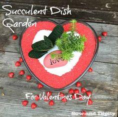Succulent Dish Garden for Valentines Day