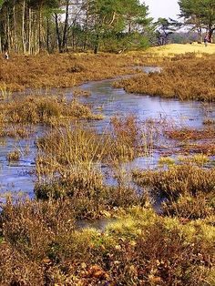Nature Bakkeveen Friesland