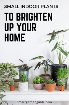 Small Indoor Plants That Are Suitable For Any Space You Have. These Stunning Indoor Plants Will Add Greenery To Your Home Without Taking Over. Complete With Houseplant Care Tips For All The Choices On The List.