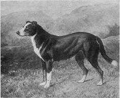 Yarrow. Circa 1888.