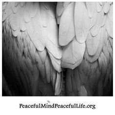"""""""I will write peace on your wings and you will fly all over the world."""" ~Sadako Sasaki"""
