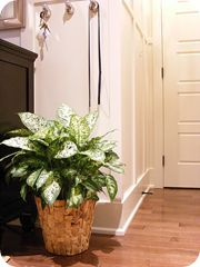 good indoor plants that are pet safe