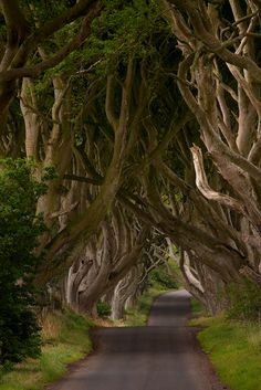 This is a unique stretch of the Bregagh Road near Armoy, County Antrim in Northern Ireland that has been re-named locally as The Dark Hedges.