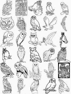 corujas - Rosella Horst - Álbuns da web do Picasa...COLLECTION OF OWL SKETCHES!!