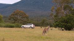 Volvo is testing kangaroo avoidance technology for Australian drivers