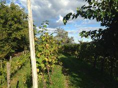 #story #viti #ConeglianoValdobbiadene #Veneto #mylife #inspiration #italy #autumn2015