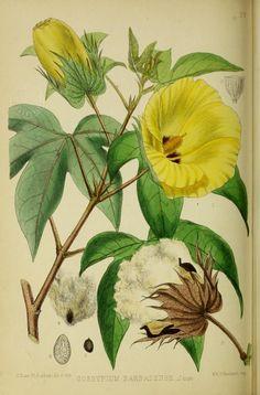 1 - Medicinal plants. - Biodiversity Heritage Library