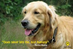 Dogs never bite me. Just humans. —Marilyn Monroe