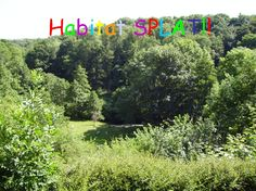 Habitat SPLAT - Habitat Keywords SPLAT PowerPoint- a fun way of testing knowledge.