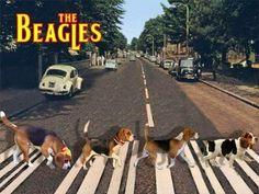 O caso dos Beagles e o churrasco nosso de cada dia