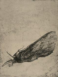 Moth-cellany-4