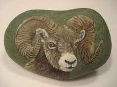 Bighorn Sheep Portrait Hand Painted on A Rock