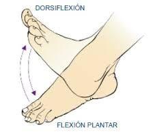 Flexión Plantar.- aquella en la que el pie o los dedos se doblan hacia la cara plantar.(Se levanta sobre la punta de los dedos) DORSIFLEXION.- Describe la flexión del tobillo que ocurre al subir cuestas o levantar los dedos del suelo.