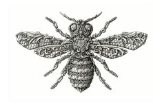 Intricate Line Drawings of bee or wasp