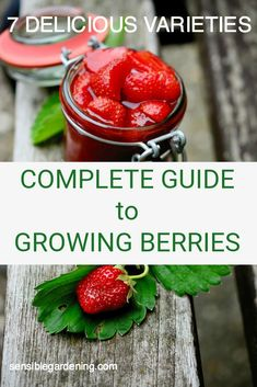 A complete guide to growing 7 delicious varieties of berries in your garden.