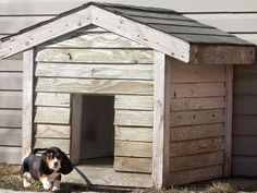 27 Innovative Doghouse Designs : Smokey the pup inherited this old classic when his family moved to a new house. He will soon grow into the bunkhouse, which is sturdily built to withstand the snowy Canadian winters. From DIYnetwork.com