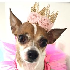Dog Crown with Flowers Puppy Crown Gold Crown by SugarHats on Etsy