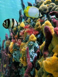 Esponjas de colores del mar y peces tropicales en un arrecife de coral