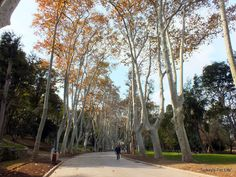 One of our favourite Istanbul pastimes is wandering without purpose. In autumn, Gülhane Park is a very tranquil place to find yourself.