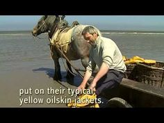 The Fishing Horses of Belgium Will Take Your Breath Away - Horse Collaborative