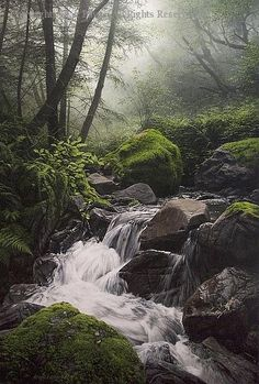 Webb Creek - Oil by Adair Payne