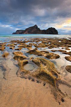 Stone Squid Calheta beach in Porto Santo, Madeira.