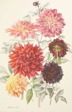 dahlia tattoo possibly to go with my phylogenetic tree? @Ashley Walters Walters Walters Martin