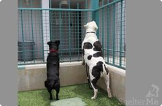 Help Ebony (A1265234) and Sampson (A0997154) stay together and find a new home. At West Los Angeles Animal Shelter, 11361 West Pico Boulevard, Los Angeles, CA (310) 207-3156