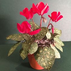 Paper cyclamen plant using @liagriffith crepe paper from @joann_stores #crepepaperrevival #liagriffith #paperflowers #crepepaper