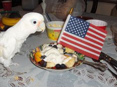 I hope everyone had a wonderful 4th of July holiday. I sure did. We had a family BBQ and I got to eat at the Big Table with everyone. Okay, maybe it was because I wouldn't stop screaming but, I still got to celebrate with everyone!!!     Love, Oscar   7/4/14