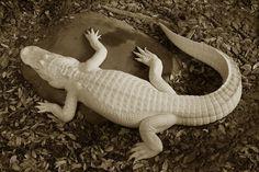 34 Best Diy Alligator Crocodile Images In 2019 Crafts