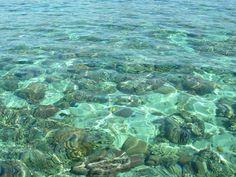 bunaken, north sulawesi Manado, My Land, Yandex, Park, Water, Plants, Outdoor, Gripe Water, Outdoors
