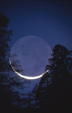 MOON TREE by Microlensing