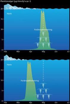 Arktiske marine økosystemer ændrer sig | Videnskab.dk