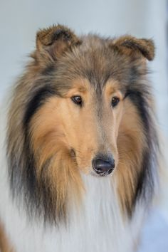 Photograph Son of Lassie by Paul Milliken on 500px