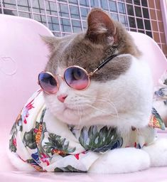 If you're trying to snap some pics of your feline looking a little fancier than usual, consider getting them to sport a pair of sunglasses for a quick picture. Cute Baby Cats, Cute Cats And Kittens, Cute Baby Animals, Cool Cats, Kittens Cutest, Cute Dogs, Funny Animals, I Love Cats, Kitty Cats