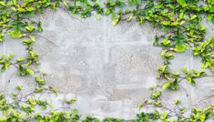 How to Get Rid of Ivy With White Vinegar#ivy #rid #vinegar #white Poison Ivy Killer, Types Of Ivy, Poison Ivy Plants, Ivy Plant Indoor, Ink Cartridge Reset, Diy Household Tips, Cleaning Hacks, Weed Killer Homemade, Architecture Tattoo