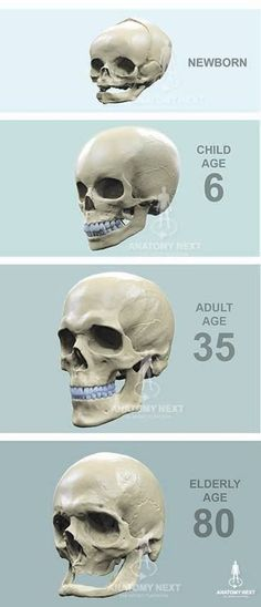 83 Best Modern Medical Illustration Images On Pinterest Anatomy