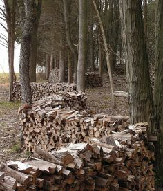 woodpiles among trees