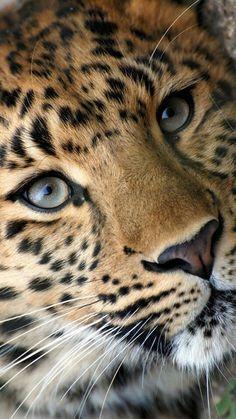 Nature Animals, Animals And Pets, Baby Animals, Funny Animals, Cute Animals, Animals Planet, Beautiful Cats, Animals Beautiful, Beautiful Pictures