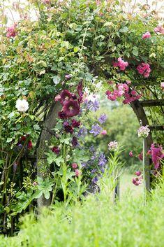 Romantic clematis and rose arch in pinks and purples. My Secret Garden, Garden Photos, Cottage Garden, Country Gardening, Gorgeous Gardens, Garden Shrubs, Outdoor Gardens, Dream Garden, Beautiful Gardens
