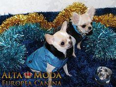 http://altamodaeuropeacanina.com/es/108-abrigos