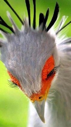 Cute Birds, Pretty Birds, Beautiful Birds, Animals Beautiful, Simply Beautiful, Beautiful Things, The Animals, Exotic Birds, Colorful Birds