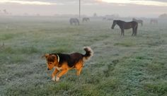 Lithuanian countryside at sunrise Baroque Architecture, Southern Europe, Baltic Sea, Lithuania, Beautiful Creatures, Dog Love, Best Dogs, Animal Pictures, Fathers