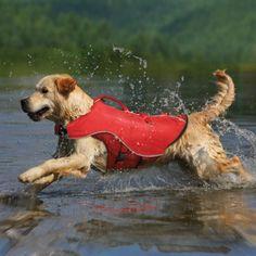 Con este chaleco salvavidas lo podrás dejar divertirse sin preocuparte por sus habilidades de natación.