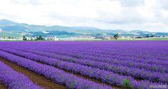 ฮอกไกโด(Hokkaido)