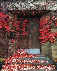 Vines around doorway