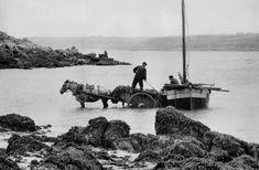 Henri Cartier-Bresson FRANCE. Bretagne. Finistere. 1956. Seaweed collecting (ramassage du goémon).